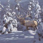 Winter Sundance by Daniel Smith